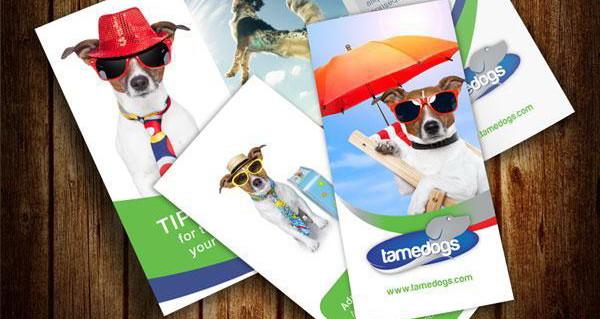 tri fold, brochure design mockup, psd,ai