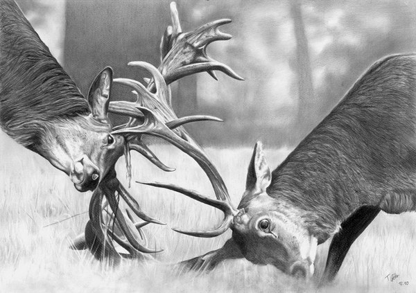 deer-pencil-drawings