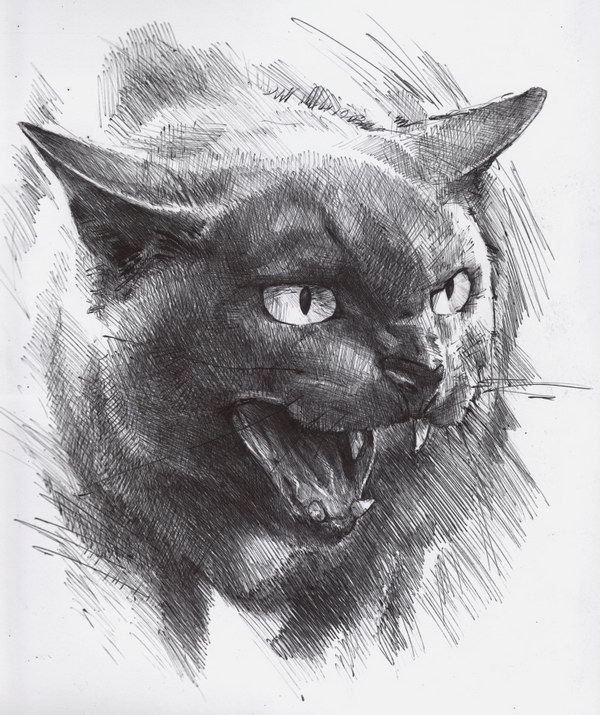 pencil drawing of cat