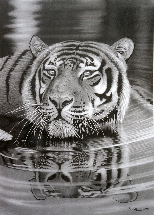 pencil-drawing-of-tiger