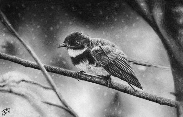 pencil-drawing-of-winter-bird