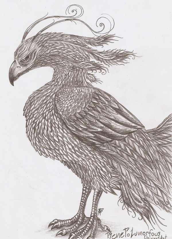 pencil-drawings-of-phoenix