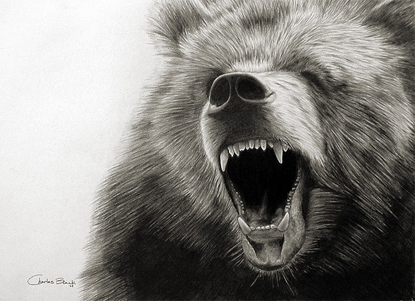bear drawing 1