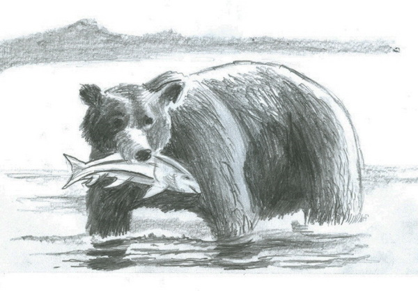 bear drawing 11