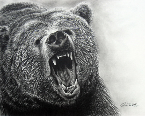 bear drawing 2