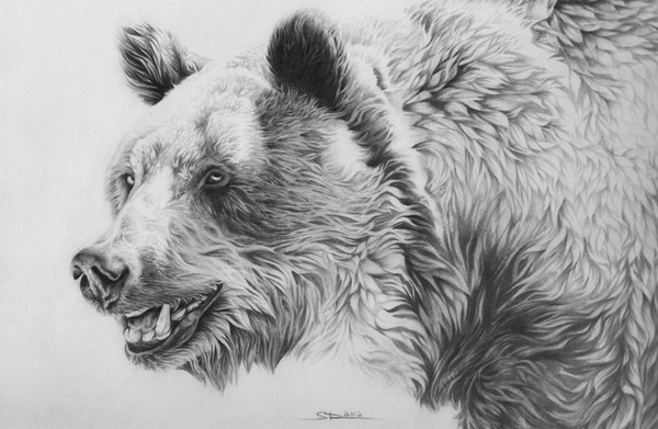 bear drawing 3