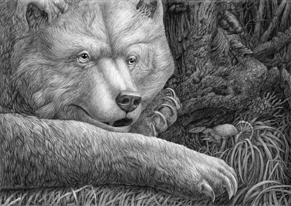 bear drawing 5