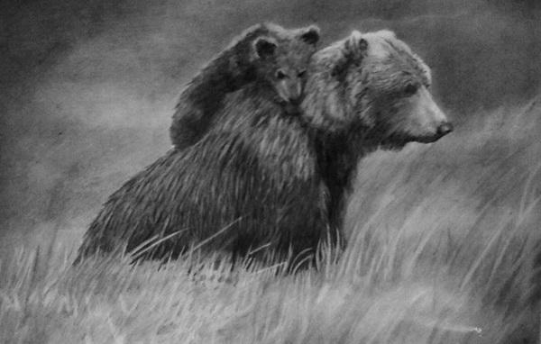 bear drawing 6
