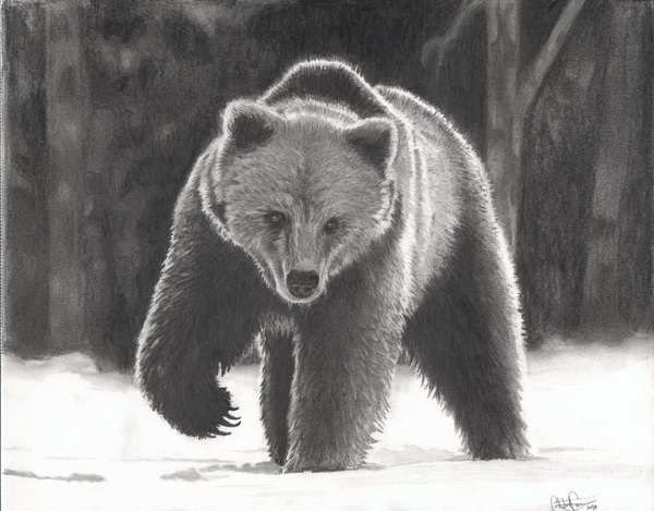 bear drawing 8