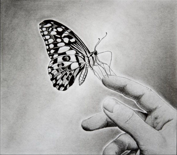butterfly drawing 1