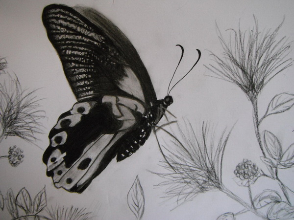 10+ Beautiful Butterfly Drawings for Inspiration 2017