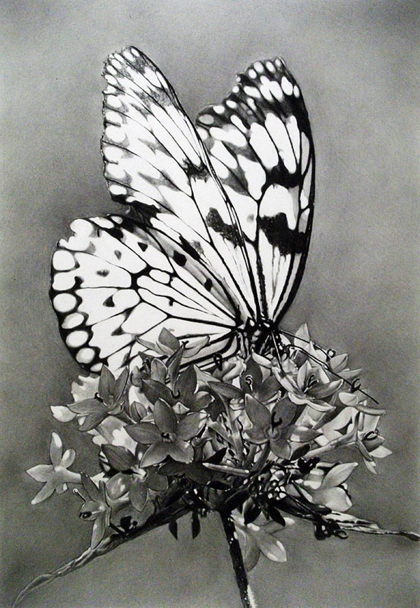 butterfly drawing 7