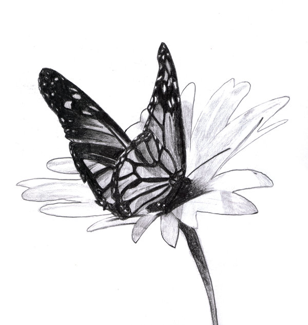 butterfly drawing 9