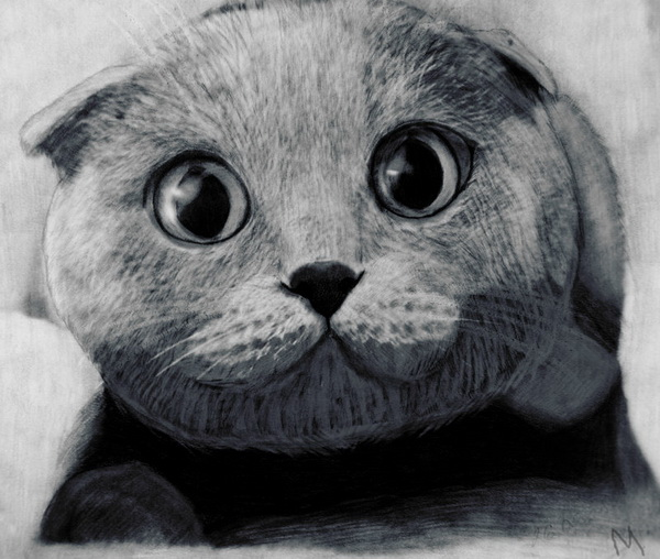 cat drawing 3
