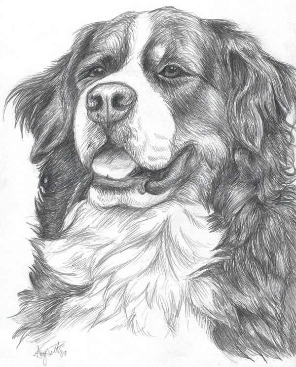 dog drawing 2