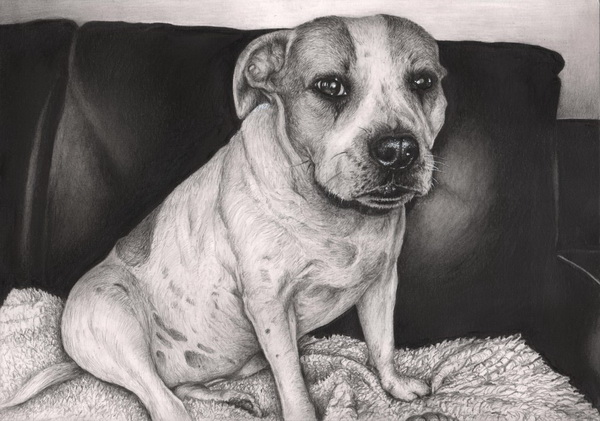 dog drawing 3