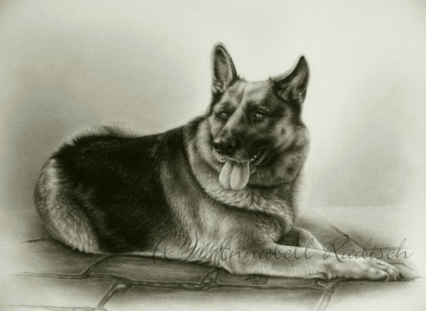dog drawing 4