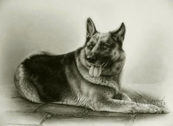 dog drawing 4