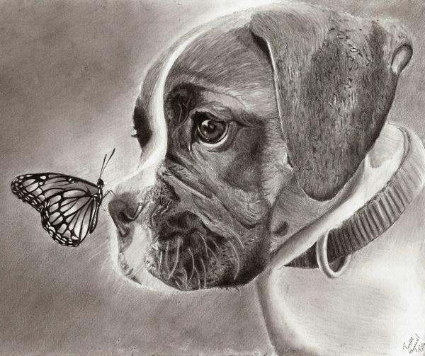 dog drawing 5