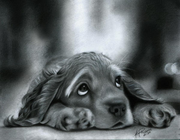 dog drawing 6