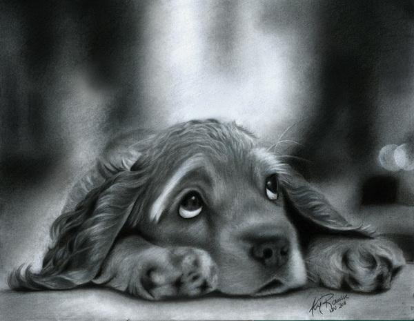 dog drawing 6