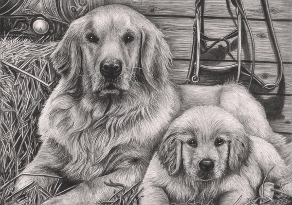 dog drawing 8