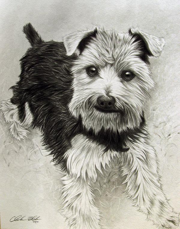 dog drawing 9