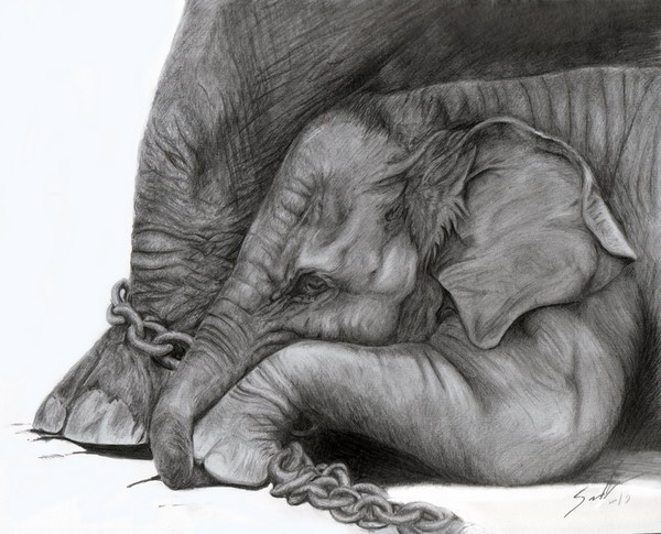 elephant drawing 1