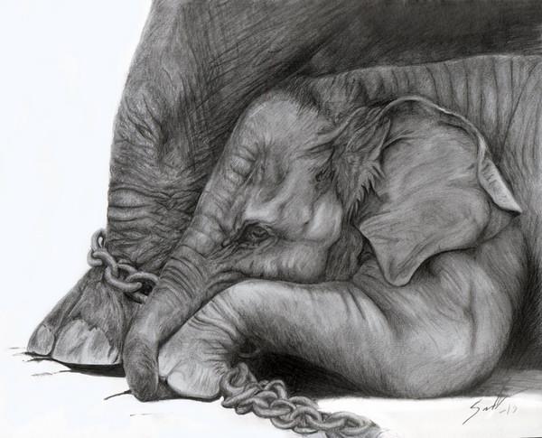 elephant drawing 1