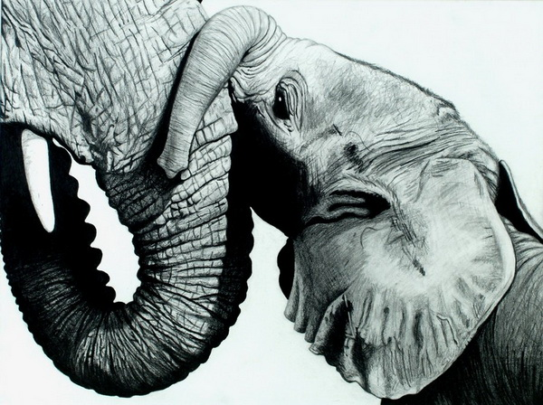 elephant drawing 10