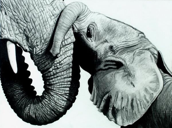 elephant drawing 10