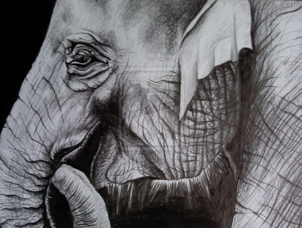 elephant drawing 11