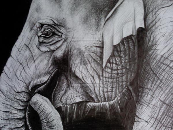 elephant drawing 11