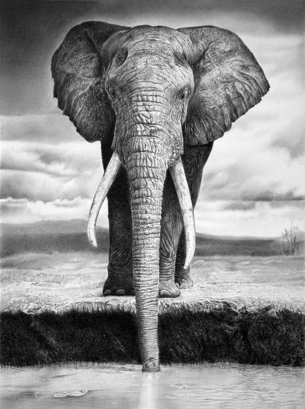 elephant drawing 2