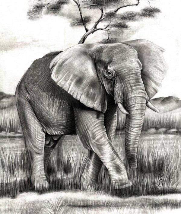 elephant drawing 3