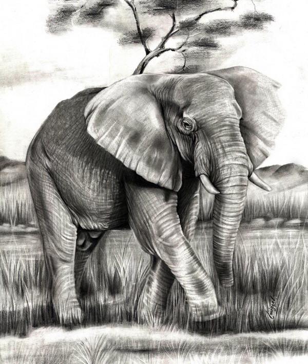 elephant drawing 3