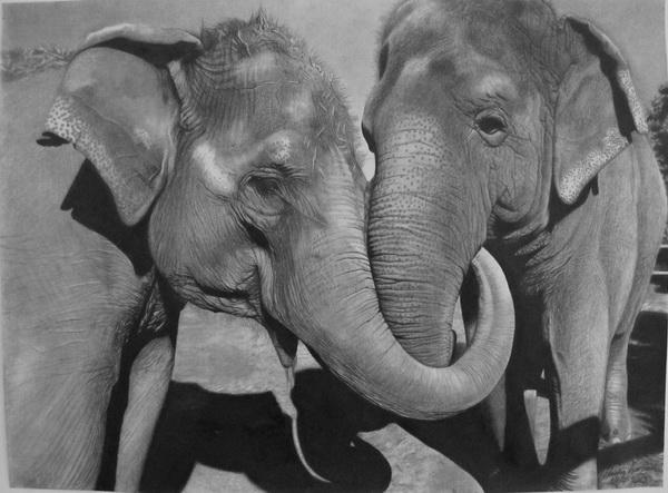 elephant drawing 4