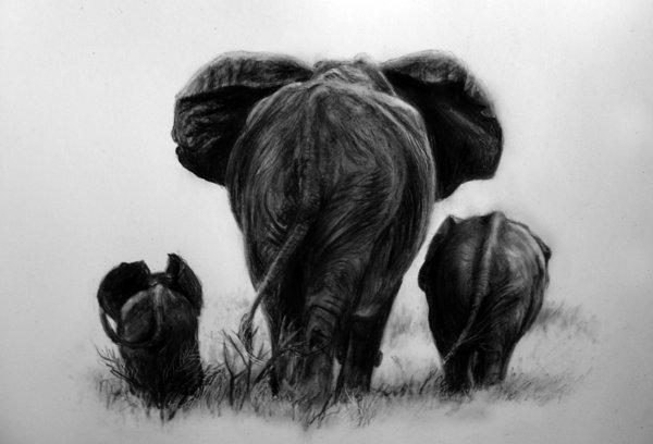 elephant drawing 6