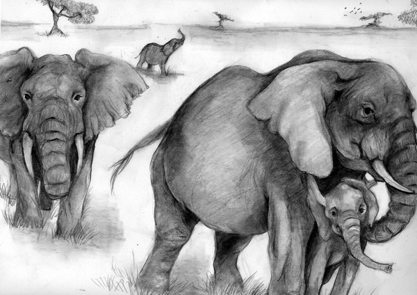 elephant drawing 7