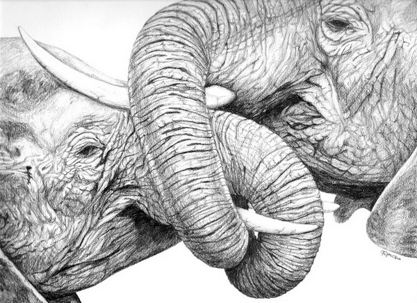 elephant drawing 9