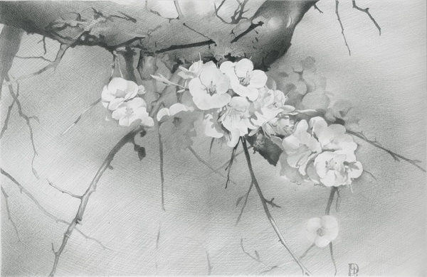 flower drawing 10