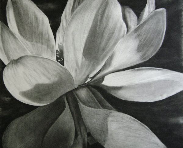flower drawing 2