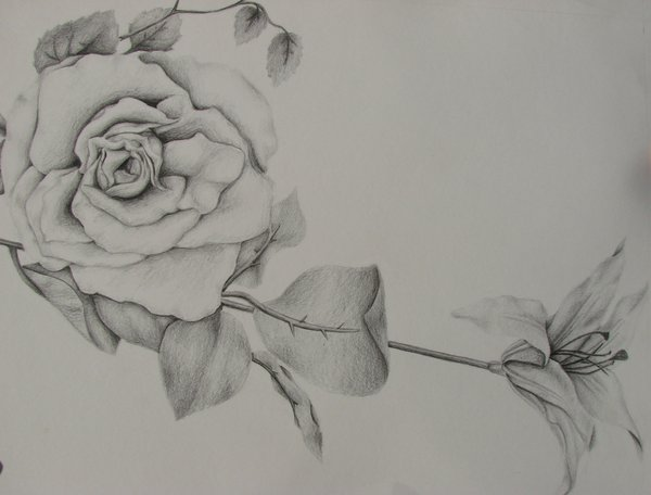 flower drawing 3