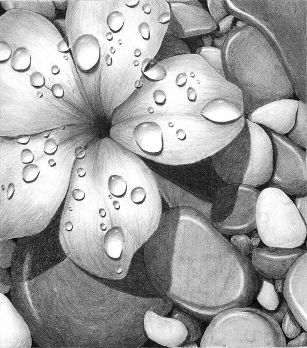 flower drawing 6