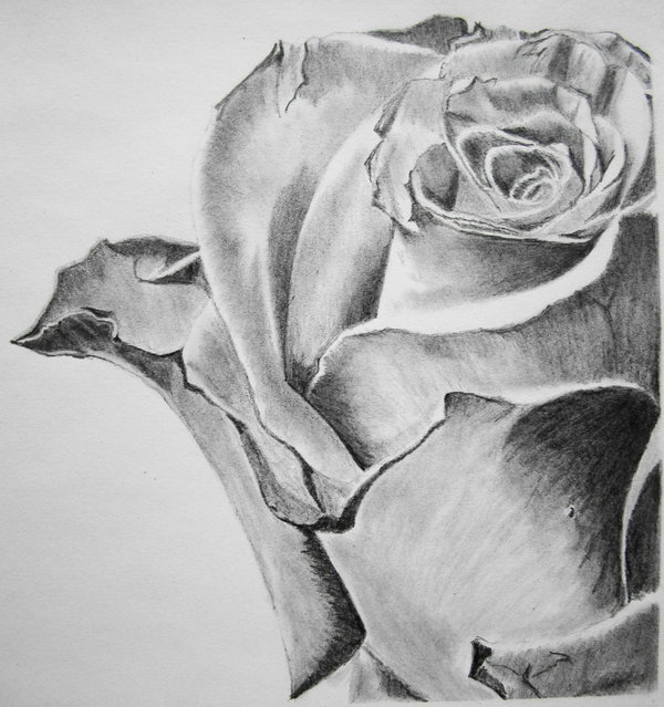 flower drawing 8