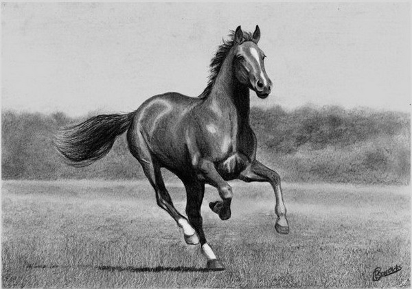 horse drawing 11