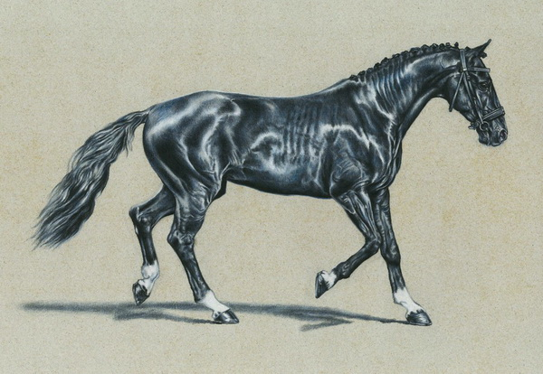 horse drawing 12