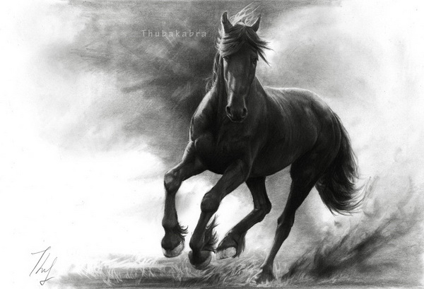 horse drawing 2