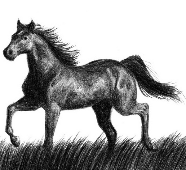 horse drawing 4