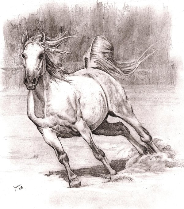 horse drawing 7